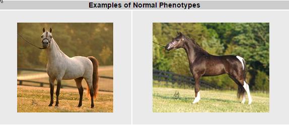 Examples of Normal Phentypes